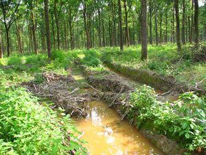 Hrvatske šume licemjerje