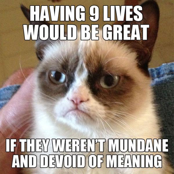 funny_grumpy_cat_meme_selection_640_04