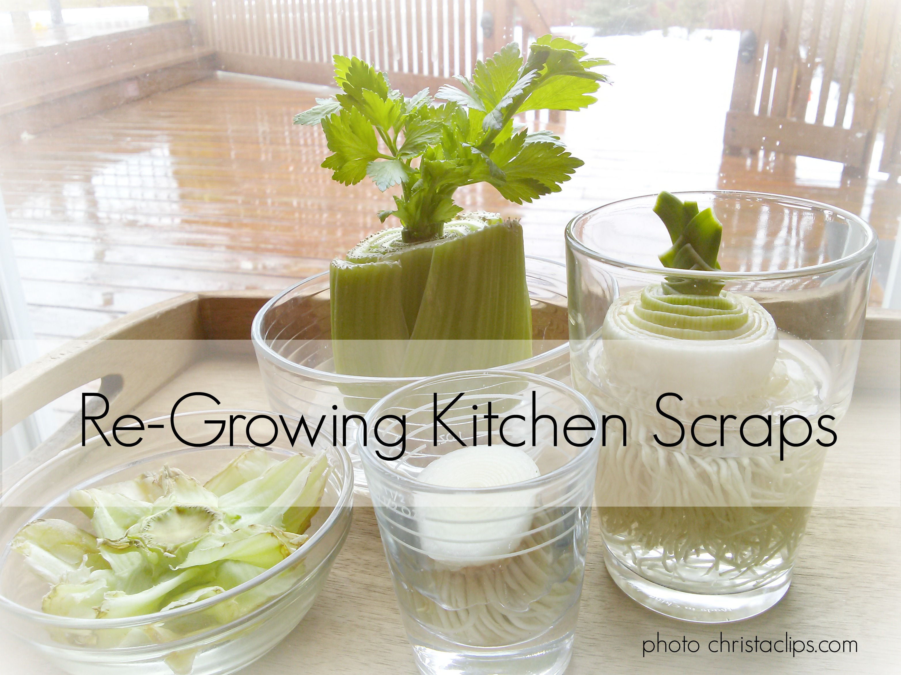 re-growing-kitchen-scraps-christa-clips-save-at-home-mom